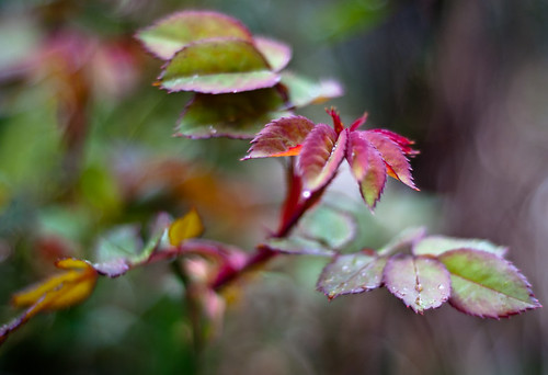 Blur Red Plant | by Orbmiser