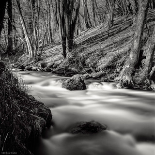 In the Woods of the Smooth Water River I | by M a r c O t t o l i n i