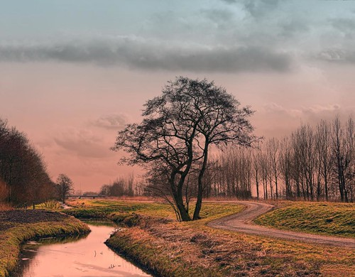 The path around the tree | by Wim Koopman
