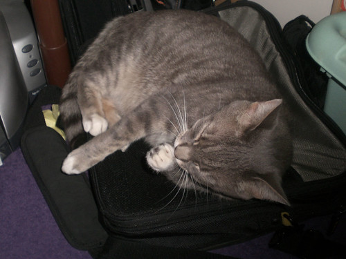 Nims on the laptop bag (3) | by cox-on-the-box - art, clay, cats, veg