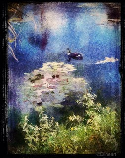 Inspired by Monet | by elineart