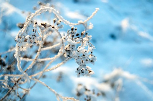 snow I | by Juni_mond