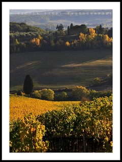 CHIANTI.01 | by nicola pieri