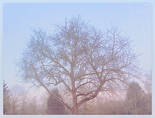 winter tree | by sabrina. G very busy!