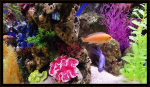 Lil colourful aquarium | by JimmyMac210 - just returned home from hospital