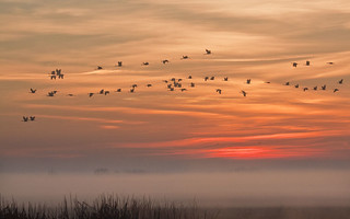 Cranes Above the Mist at Sunrise | by marlin harms