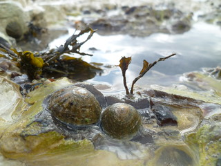 Limpets, roockpool, Beach, Seven Sisters, birling gap, East Sussex | by Wanda Sowry