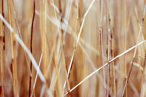 reed | by SOVA5