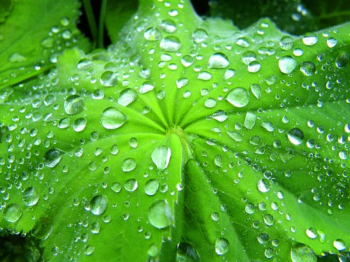 Rainy Leaf | by Stanley Zimny (Thank You for 28 Million views)