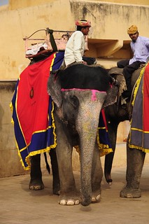 The Elephants of Amer Fort | by Saumil U. Shah