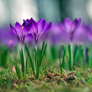 Yay! The first spring flowers! | by Lano Ling