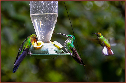 Costa Rican Hummingbirds | by Martin Smith - Having the Time of my Life