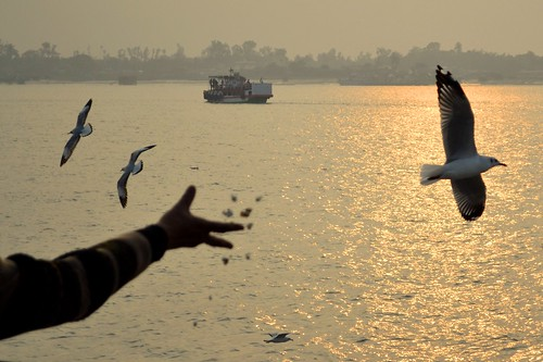 Sunset with Flying Gulls | by pallab seth