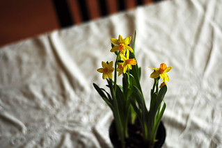 Little Spring Things | by julianna smith
