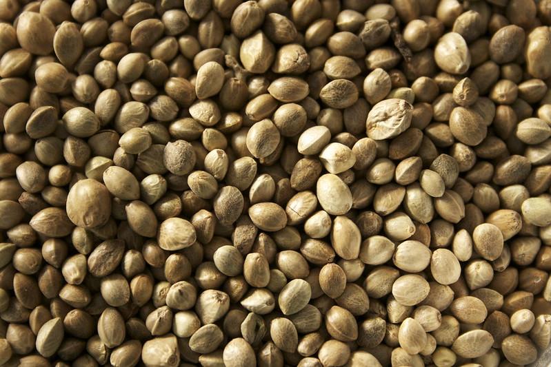 Семена конопли чем полезны перед зачатием ребенка курил марихуану