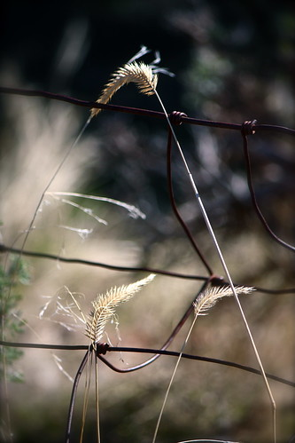 Just ..... Wire and weeds | by Parowan496