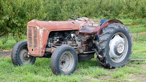 Orchard Tractor Massey Ferguson 50 : Massey ferguson tractor seen on an orchard near clyde
