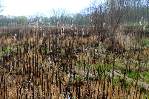 Lincoln Marsh, Early Spring 2012 | by danxoneil