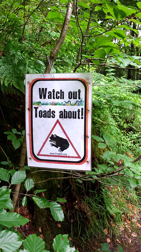 Toad sign