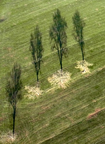 Shadow on the meadow - KAP - | by Credi