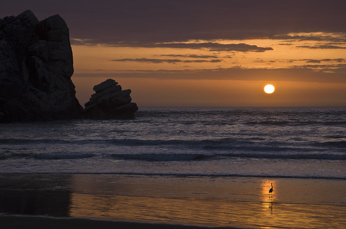 Solitude Standing, Morro Strand State Beach, CA 2010 | by Lone Cypress