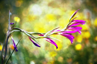 Wildflower | by Theophilos