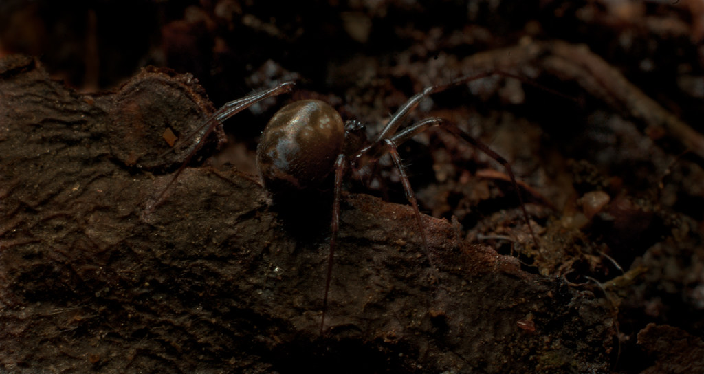 Lord Of The Rings Ungoliant