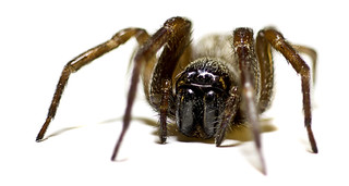 Macro Spider-120 | by The1KrisRoB