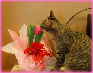 always take time to smell the flowers | by LisaLynn=)