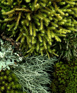 53903 moss and lichen | by horticultural art