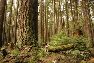 Wonder in the Woods | by Kaiser the Beagle