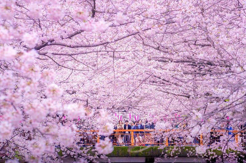 sakura-cherry-blossom-drone-photography-danilo-dungo-japan-1