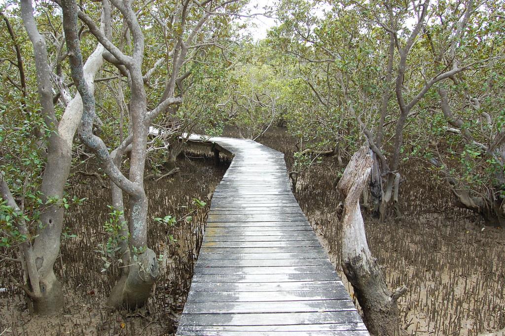 2009 Jan NZ Mangroves Park 045