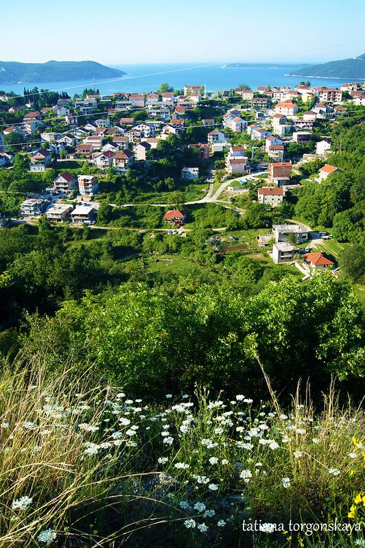 Пейзаж с полевыми цветами на переднем плане