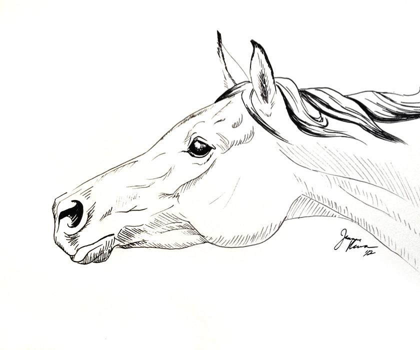 arabian horse art original pen u0026 ink horse drawing by jeanner