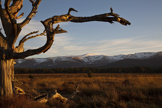 Cairngorm | by Teuchter Prof