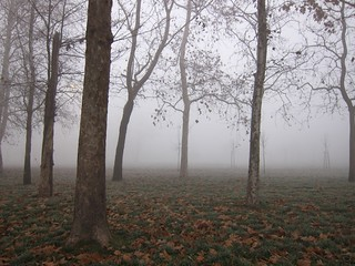 Parco di Trenno in the mist | by Lanfranch
