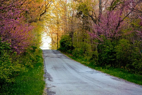 Purple trees on a lovely spring day. | by Beth J18