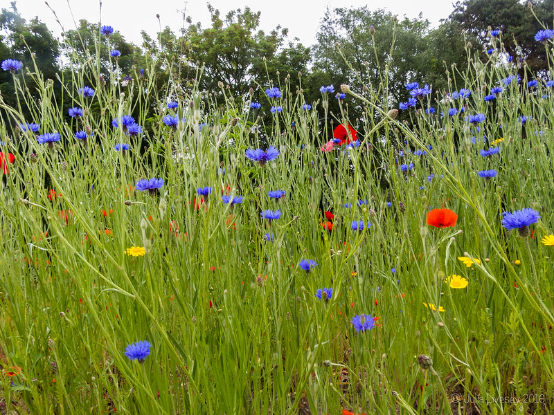Wildflower bank by the car park