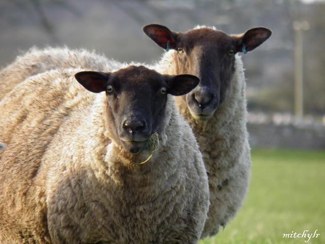 Ewe Two!!
