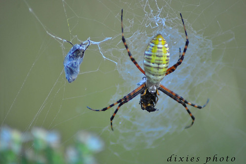 Spider | by dixie's photograph 2011