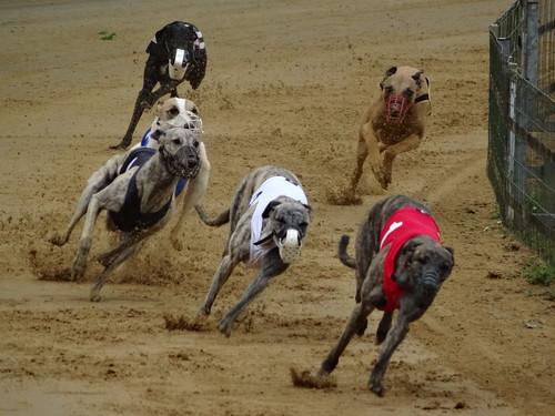 International dog race: Großer Preis von Gelsenkirchen