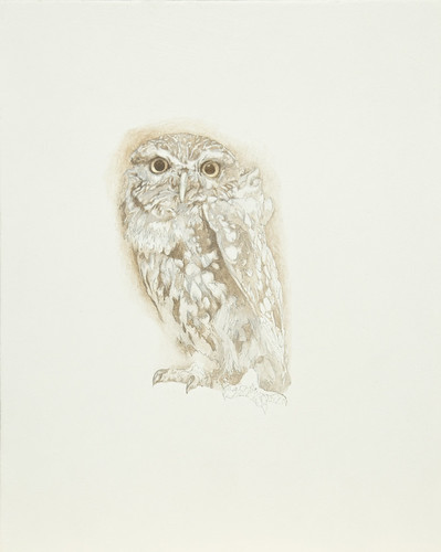 Little Owl - Oil Painting by Steve Greaves Work in Progress 7 | by Steve Greaves