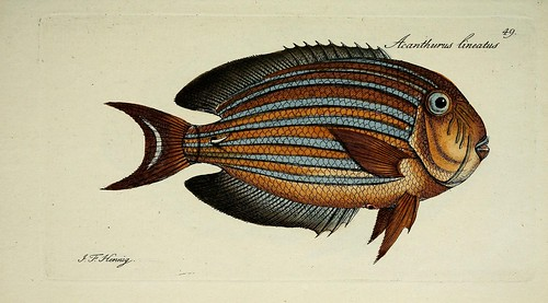 n102_w1150 | by BioDivLibrary