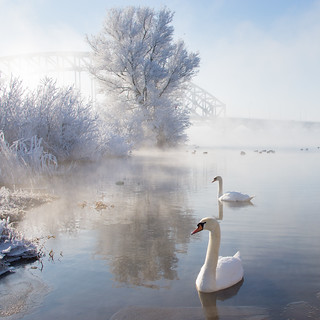 Icy Swan Lake | by Edwin van Nuil Photography