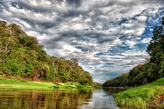 Amazon Tributary | by Dwood Photography