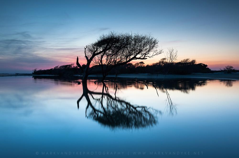 South Carolina Charleston Folly Beach Coastal Tree At Sunset