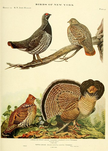 n876_w1150 | by BioDivLibrary