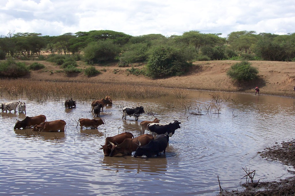 NWI Control of Water Borne Diseases in Lorngosua - Kenya (… | Flickr