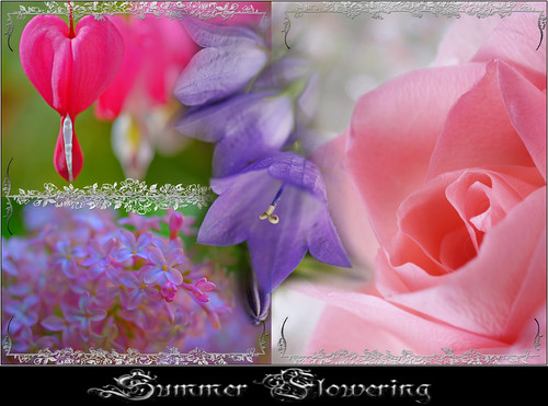 Summer Flowering | by Aum Kleem